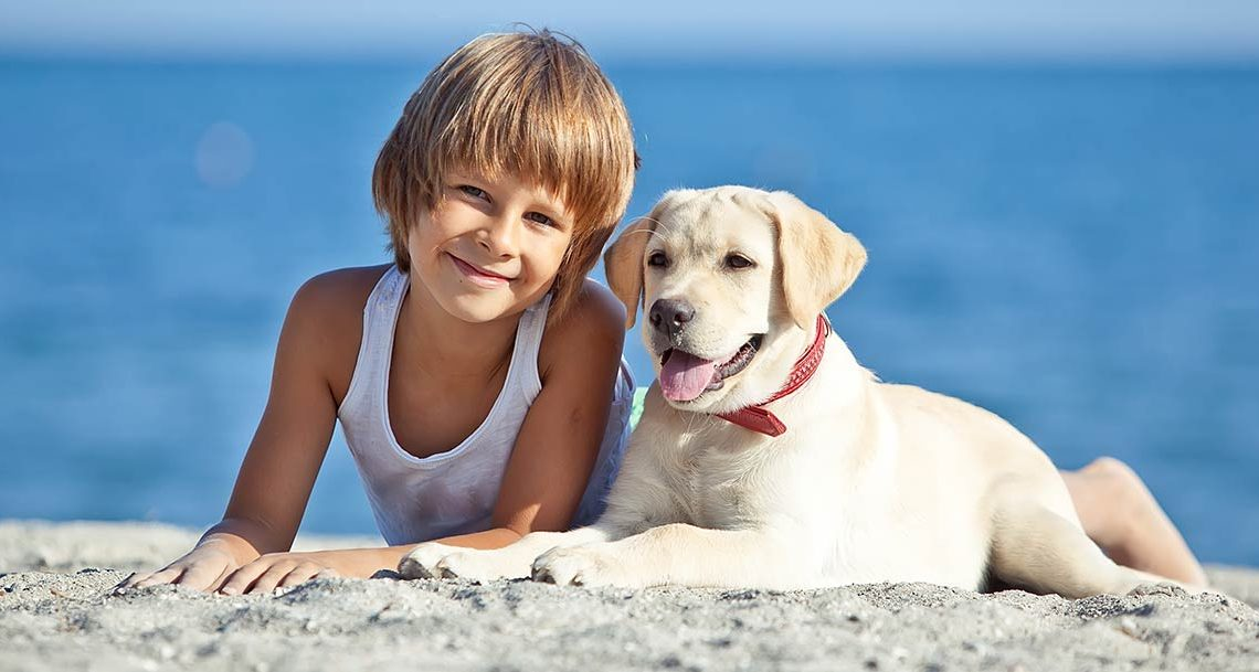 Hotel Pet Friendly a Cattolica: Hotel Ambasciatori